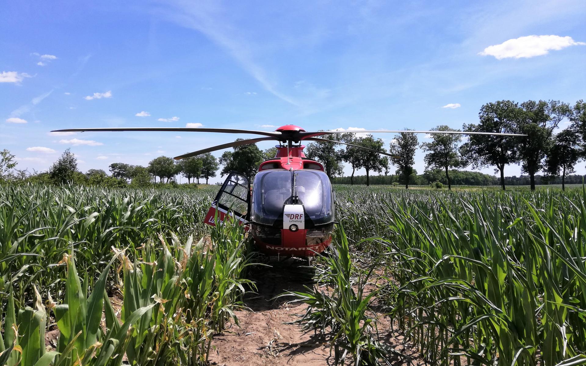 Landung im Maisfeld. Nach dem Aussteigen bahnen sich die Luftretter den Weg durch das Getreide und eine Dornenhecke. Dann erreichen sie das Unfallopfer und stabilisieren es routiniert.