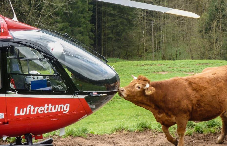 Auch der Rettungshubschrauber der DRF Luftrettung weckt großes Interesse bei dem Tier. (Symbolbild)